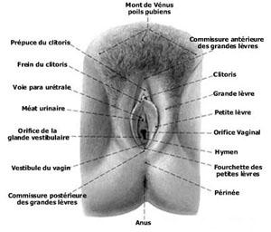 Caractère du Cancer : portrait astrologique du Cancer -